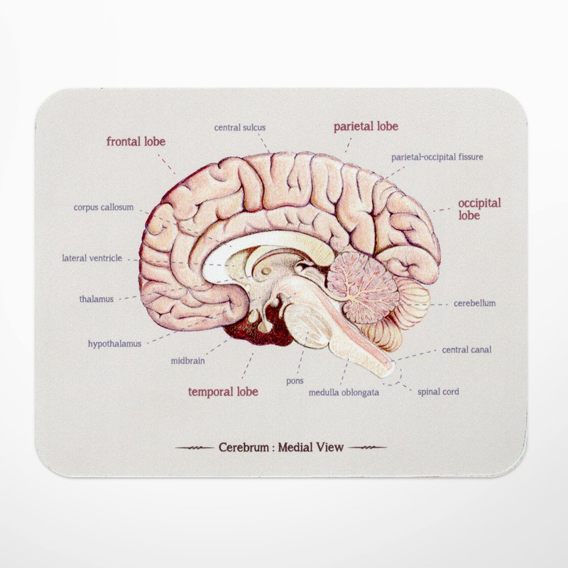 Brain anatomy map mouse pad, doctor nurse science gift / gift