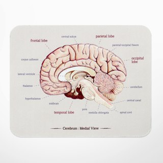 Elegant brain anatomy figure mouse pad
