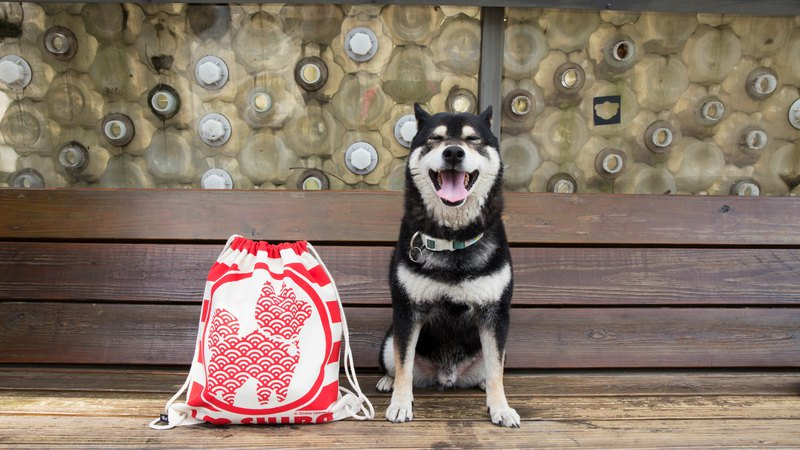 Shiba Inu University - Jingle Dog Backpack, Backpack, Shiba Dog Backpack