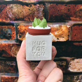 Hug for you gives you a hug. Meaty magnet potted plants
