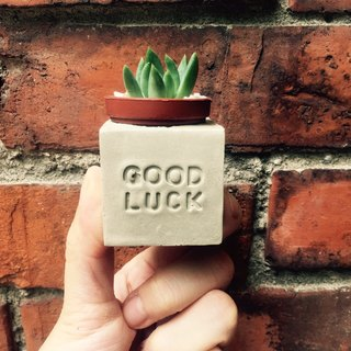 Good luck Good luck ~! Magnet potted succulents