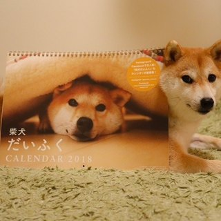 2018 Shiba Inu Different wall covered calendar