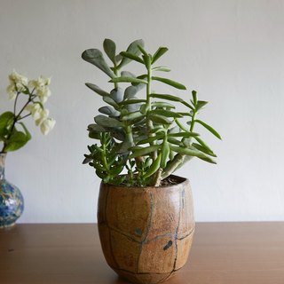 Tortoise shell diary _ pottery flower pot