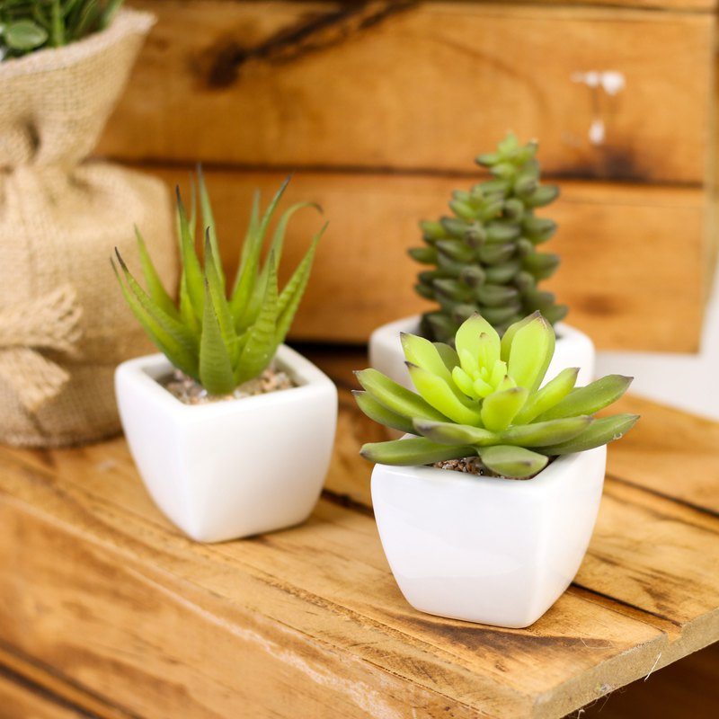 [Plant] mini fleshy three-piece group _ no pick _ Taiwan flower / artificial flower / plant / succulent