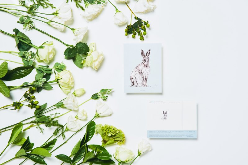 Assam rabbit. Endangered Species: Postcard / A card= A donation