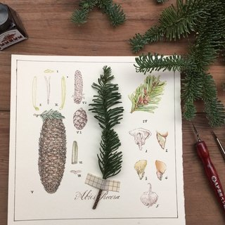 Nuobei Song Herbarium style Christmas cards