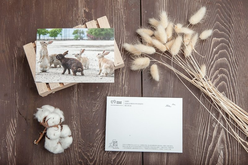 Rabbit Photography Postcard - Expectations