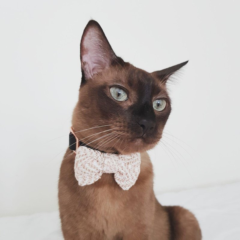 Flash Tweed Bowtie for Pets