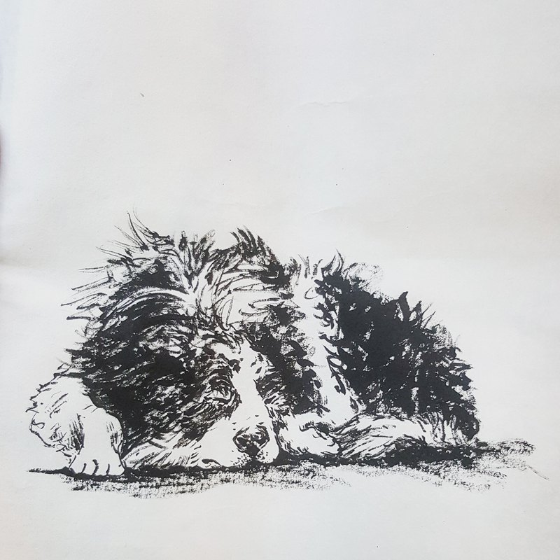 "Alley-BC, alley edge / Good Morning sketch brush ink sketch 5X7"" hand-painted hair child pet portrait"
