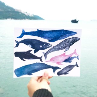 Whale Dolphin Illustration Transparent Sticker Postcard Combination