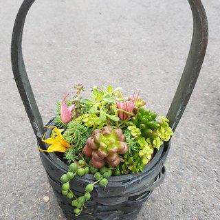 A basket of meat - plant pots + pots | pot gift opening graduation