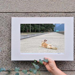 Limited rabbit photography art original - free