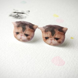 Exotic Cat Flat Face Jojo 925 silver stud earrings