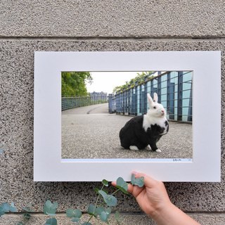 Limited rabbit photography art original - urban style