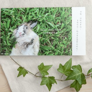 Rabbit photography illustration postcard - good afternoon