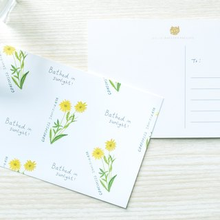 Garden Collection-Coreopsis Ianceolata postcard / buy 3 get 1