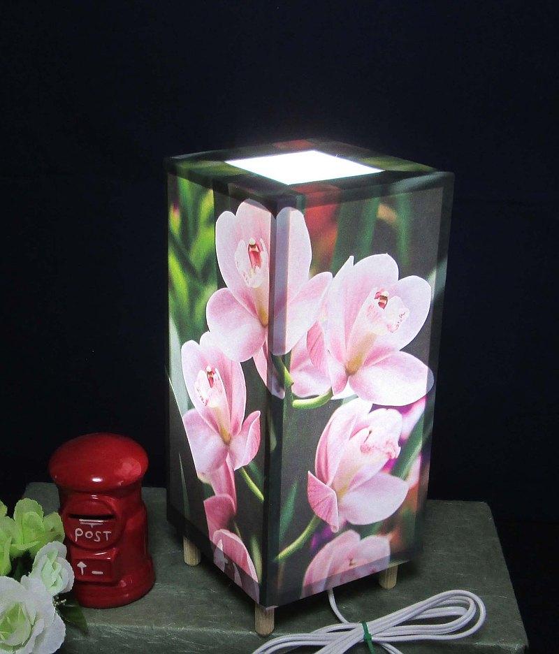 LED,蠟燭樹,沉默的思想,蝴蝶蘭,神秘的光芒!
