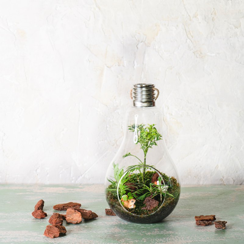 Micro Landscape Moss Ecological Bulb Ball | Indoor Plants Home Furnishing Moss Bottle