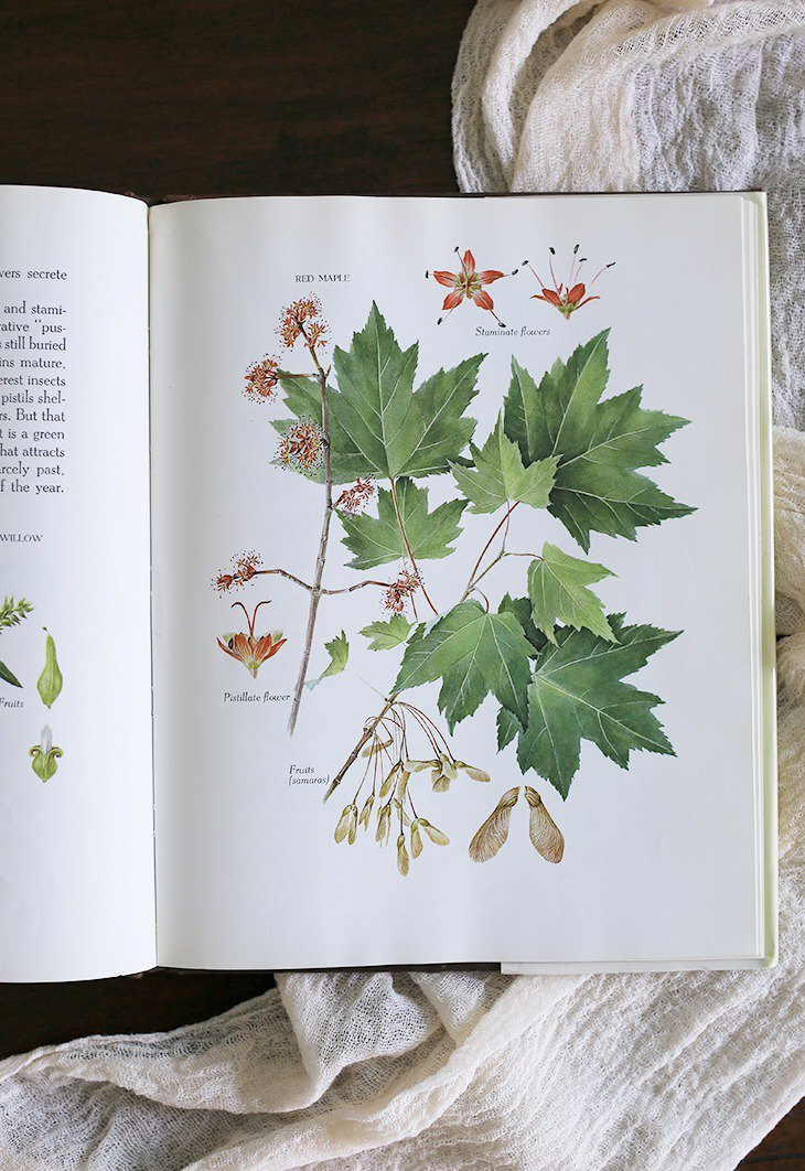 American 1994s [Trees and Leaves] ANNE Flower Vintage Old Book