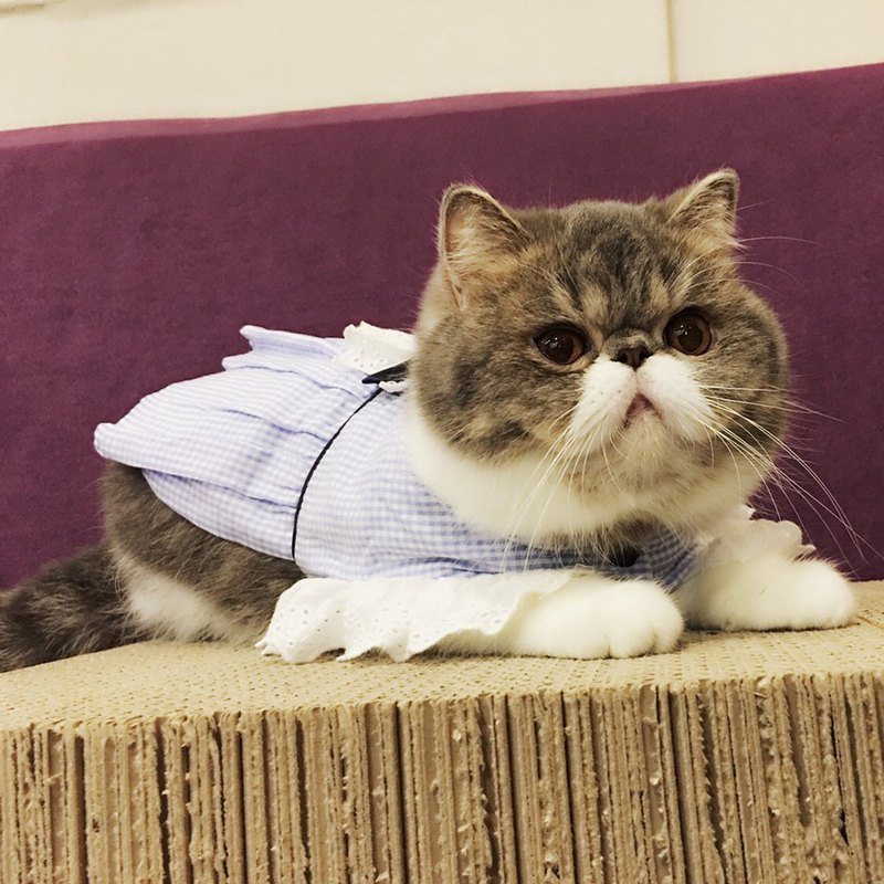 【Momojism】 Pet Clothes - Dress - Cat • Dog – Hermia