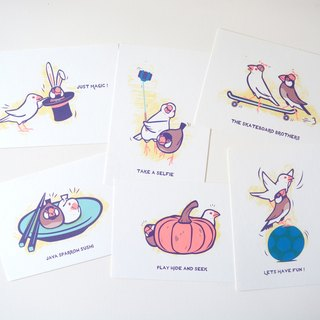 postcard:Java Sparrow Set