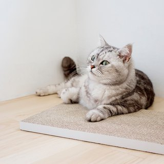[Ange home] tenacious cat scratch board (2 pieces) | Fresh white (giving pure natural catnip)