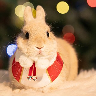 Momojism Christmas Pet Jewel Collar (Cats • Dogs) suitable for medium-small sized dogs / adult cats to kittens - Noel