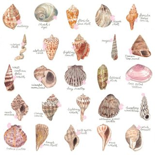 Original Watercolour Painting (A4) - Seashells Collection