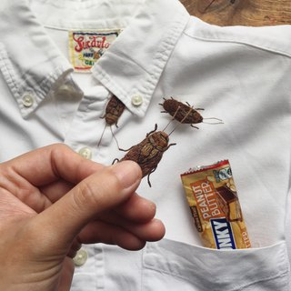 COCKROACH /  Hand Embroidery Pin Brooch