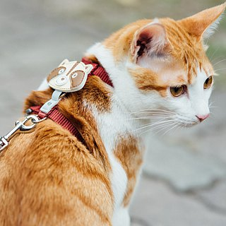 [Tail with me] classic nylon cat series chest strap burgundy