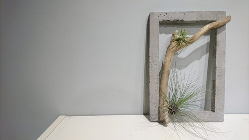 Cement box (with driftwood and air pineapple)