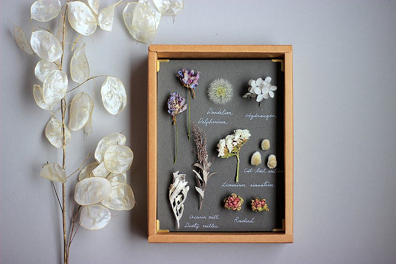 Botanical specimens, botanical illustrations, dried flowers, plant murals, graduation gifts, dandelions