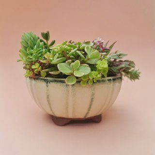 Rich multi meat pots - plant pots + pots | Potted Gifts Opening Graduation