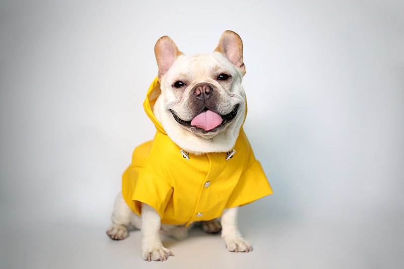 Hooded Raincoat for Dog, Lemon Yellow