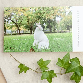 Rabbit photography illustration postcard - brilliant joy