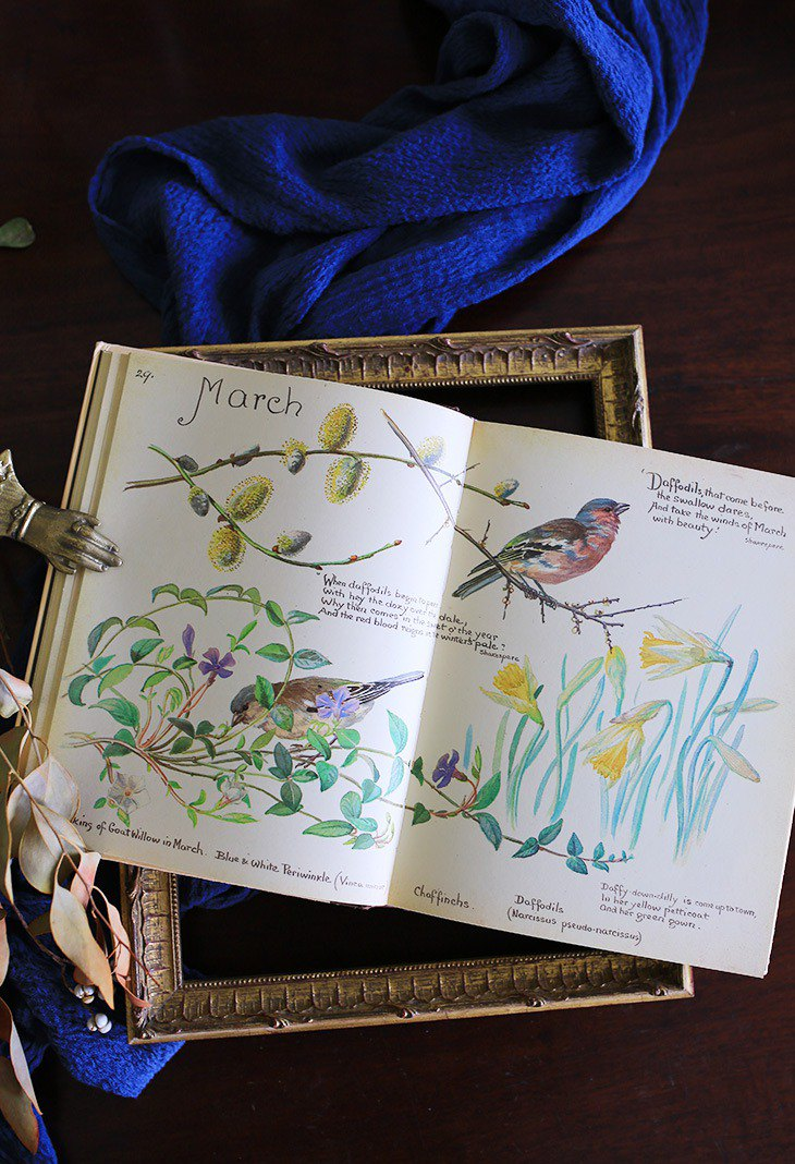 // UK Edith Holden Country Flower Diary // Vintage Hand Painted Old Book
