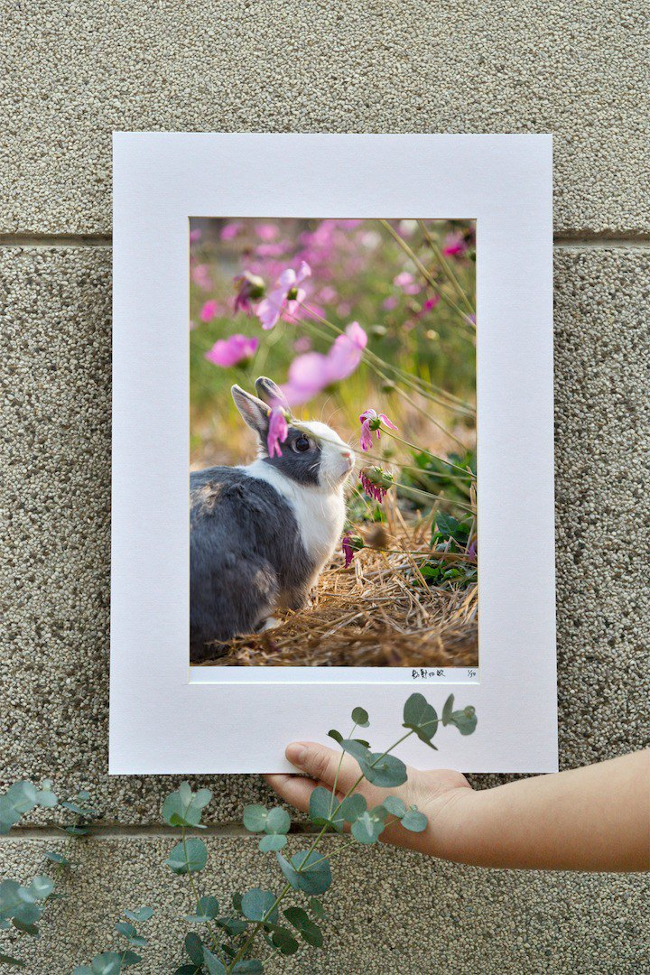 Limited Rabbit Photo Art Original - Innocent