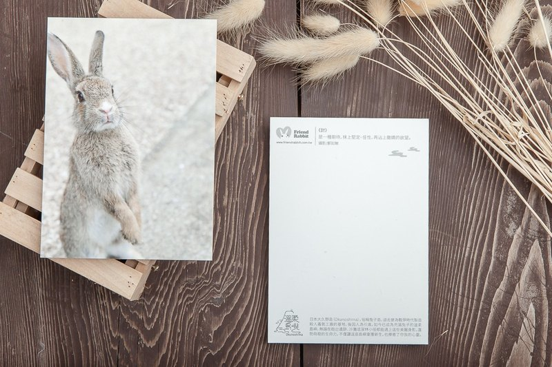 Rabbit Photography Postcard - discussion