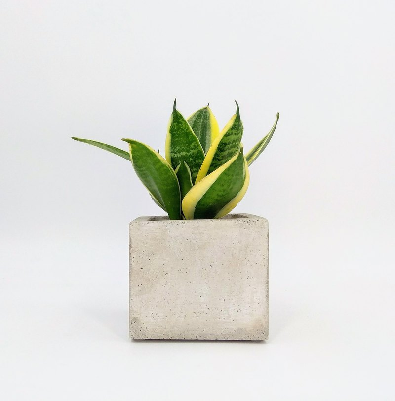 [Rectangular Basin] Cement Flower Pot / Cement Pot Plant / Cement Planting (Without Plants)