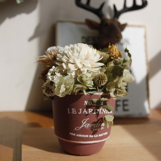 Small Potted Flower Opening Ceremony Gift into the House Gift Birthday Gift Desk