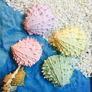 Fragrance magnets | sea scallops |
