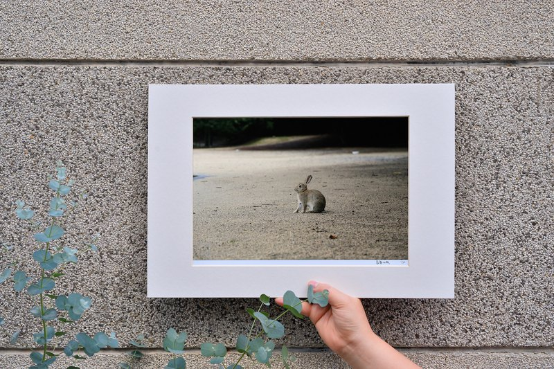 Limited rabbit photography art original - alone