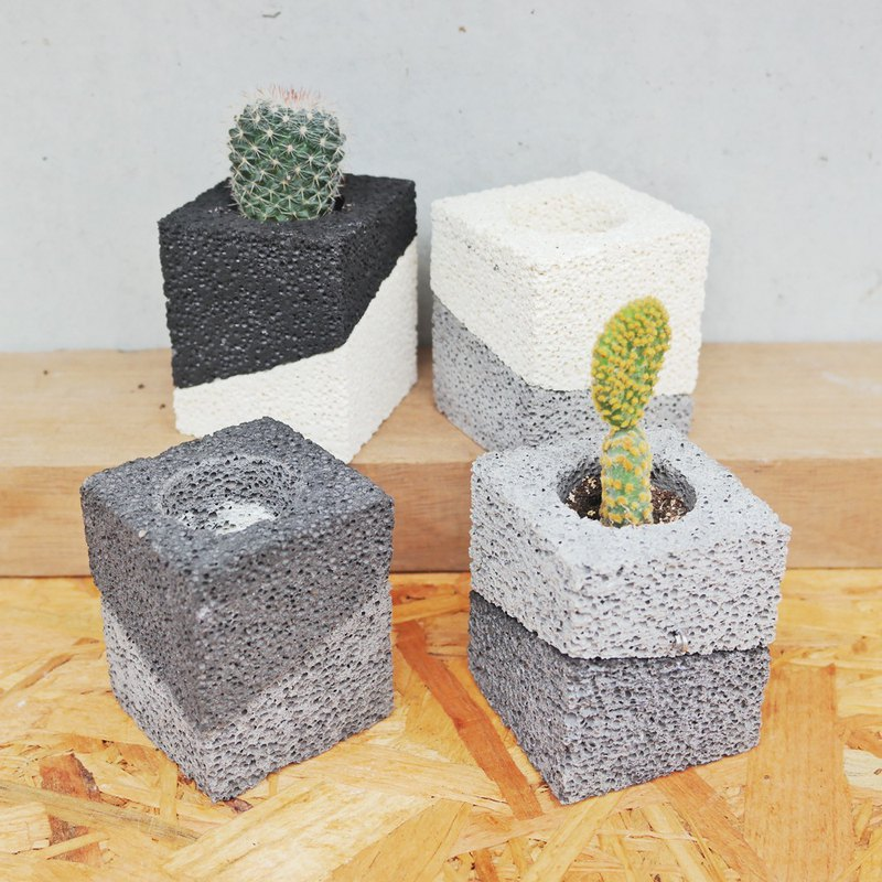 Peas succulents and small groceries - bamboo charcoal series plant (both with a cactus)