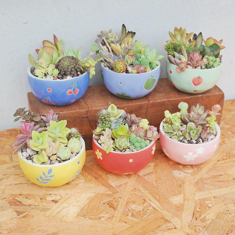 Doudou succulents and small groceries-cute round pot succulent planting combination