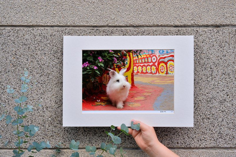 Limited Rabbit photography art original - a magical journey