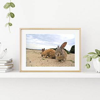 Limited rabbit photography art original - dialogue after being transformed into a rabbit