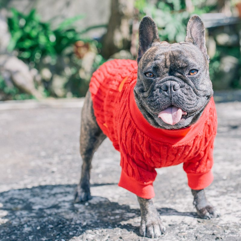 Le Ruisen New Year bark Wang Hong creak turtleneck sweater