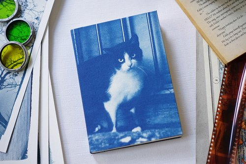 Hand sun and blue notebook - Guardian Cat
