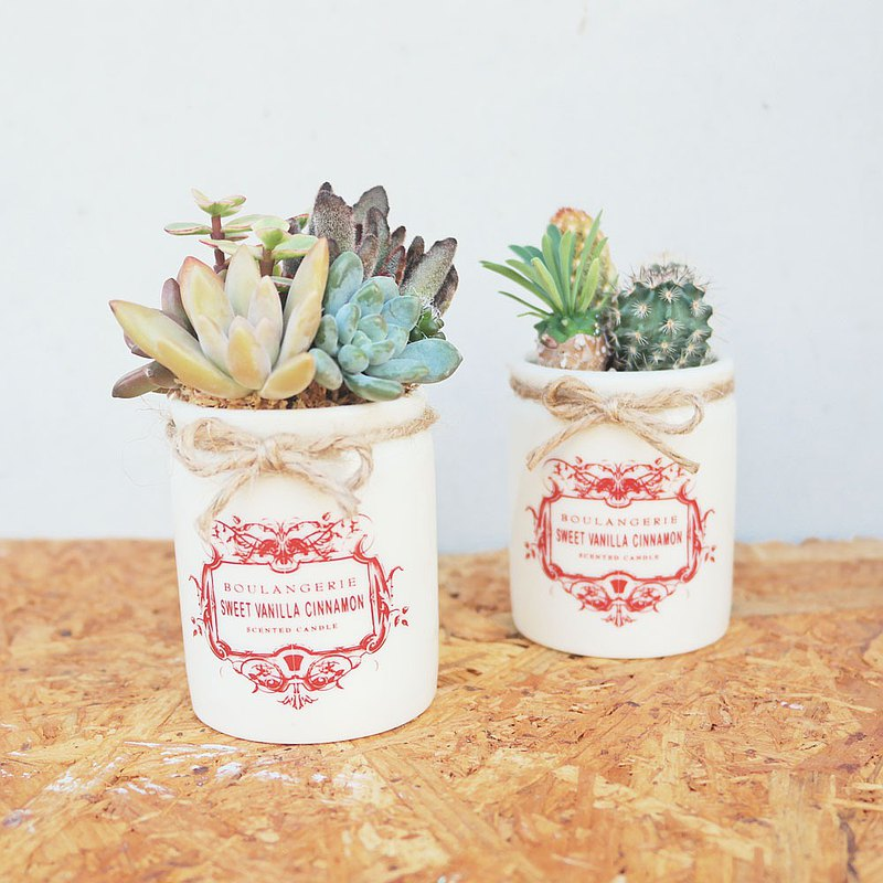 Peas succulents and small groceries-European-style red label pot succulent planting combination