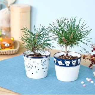 Xinshengtao Yun X Rilakkuma Ralaxiong Family Blue-and-white porcelain bonsai cultivation / Japanese black pine (two)